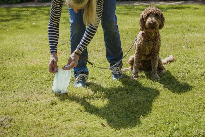 För plockning hundbajs upp royaltyfria foton
