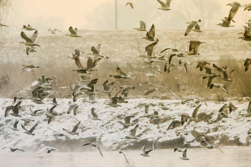 för queensland för mooloolaba för Australien kustflyg taget solsken seagulls royaltyfri foto
