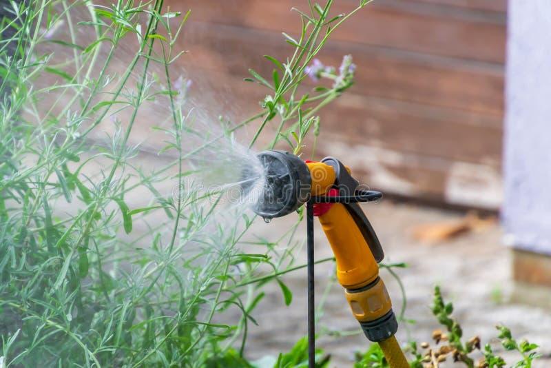 För rörbevattning för bärbar trädgård automatiskt plast- system med ett monterat duschsprejhuvud som bevattnar gräsmatta royaltyfria bilder