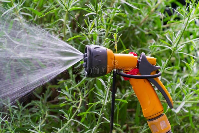 För rörbevattning för bärbar trädgård automatiskt plast- system med ett monterat duschsprejhuvud som bevattnar gräsmatta arkivfoton