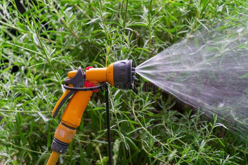För rörbevattning för bärbar trädgård automatiskt plast- system med ett monterat duschsprejhuvud som bevattnar gräsmatta arkivbilder