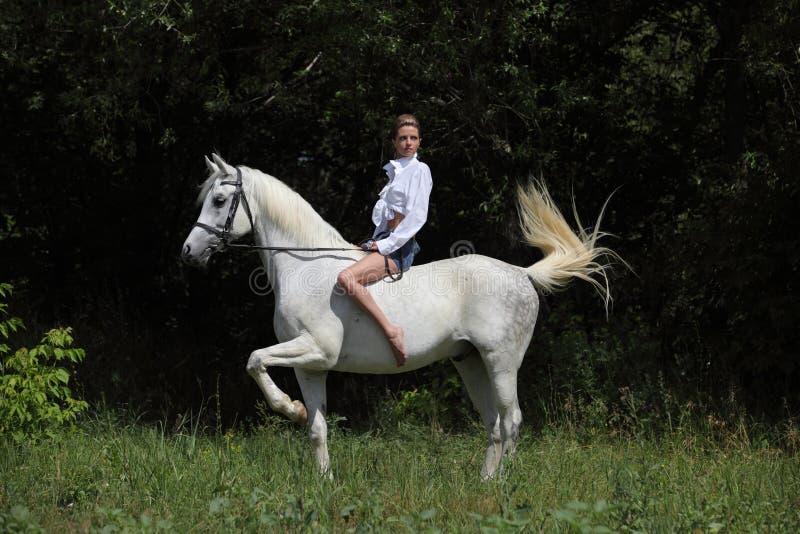 För ridningarab för ung romantisk flicka barbacka häst royaltyfria bilder