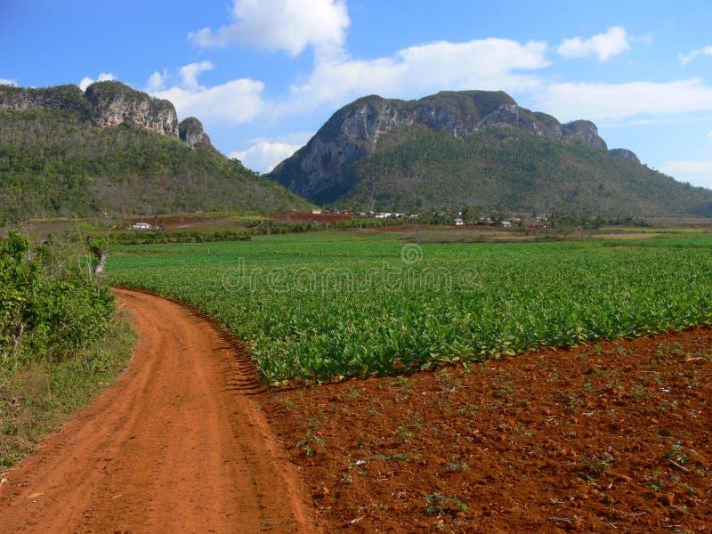 för rio för landskap för cuba del pinar vinales dal royaltyfri bild