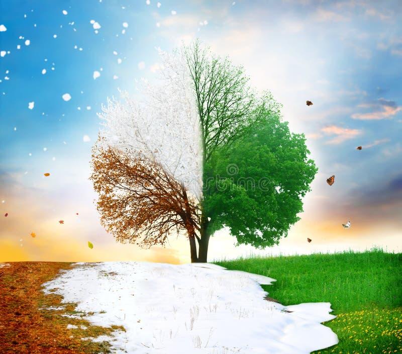 för rnwintersäsong för höst fyra tree för sommar för fjäder royaltyfri bild