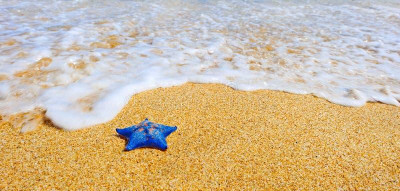 för sandhav för strand blå stjärna royaltyfria foton