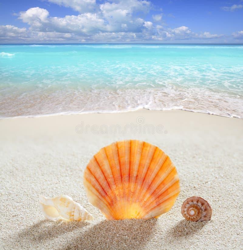 För sandskal för strand tropisk semester för perfekt sommar