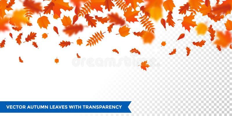 För sidamodell för höst fallande nedgång för blad för autumanl på genomskinlig bakgrund för vektor vektor illustrationer