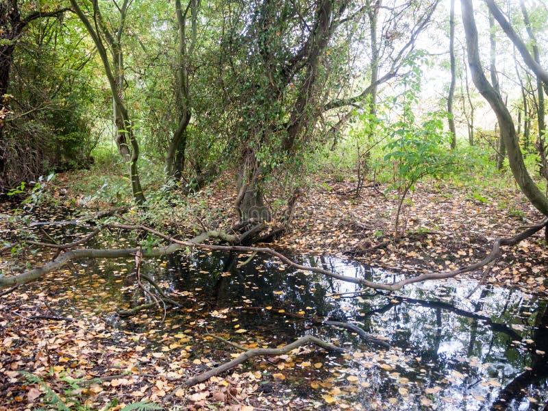 För sidaskog för höst stupad wivenhoe för sjö för landskap för natur för träd arkivbild