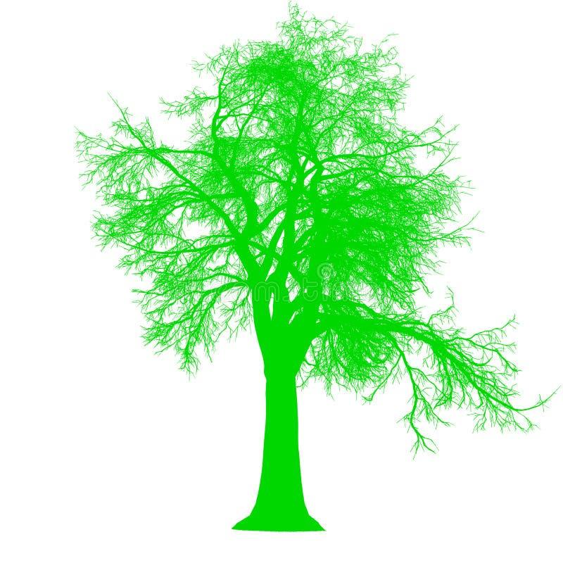 För sidosikt för träd avlövad isolerad - gräsplan - vektor kontur royaltyfri illustrationer