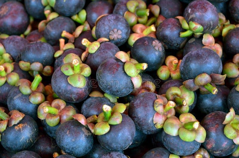 För smaklilor för tropiska frukter sött skal fotografering för bildbyråer