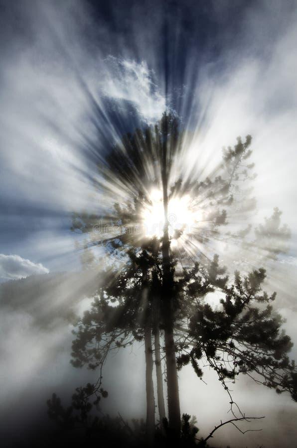 För solstrålestrålar för träd panelljus Backlit strålar av ljus royaltyfri fotografi