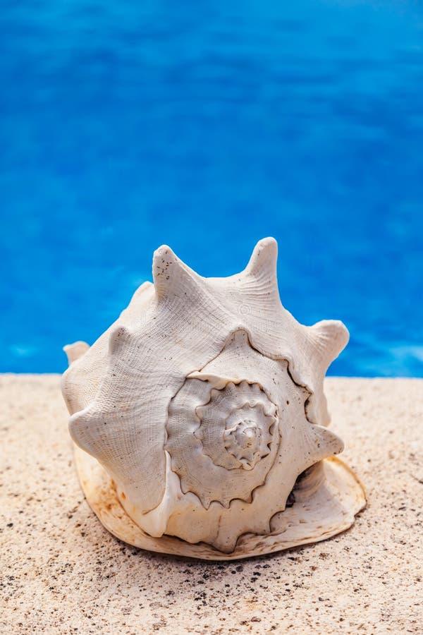 för sommarterritorium för katya krasnodar semester royaltyfri bild