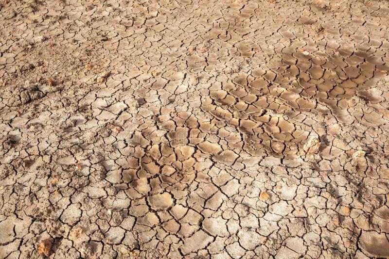 För sprickatextur för torr jord område för land, kan använda som bakgrundsagricult royaltyfri bild
