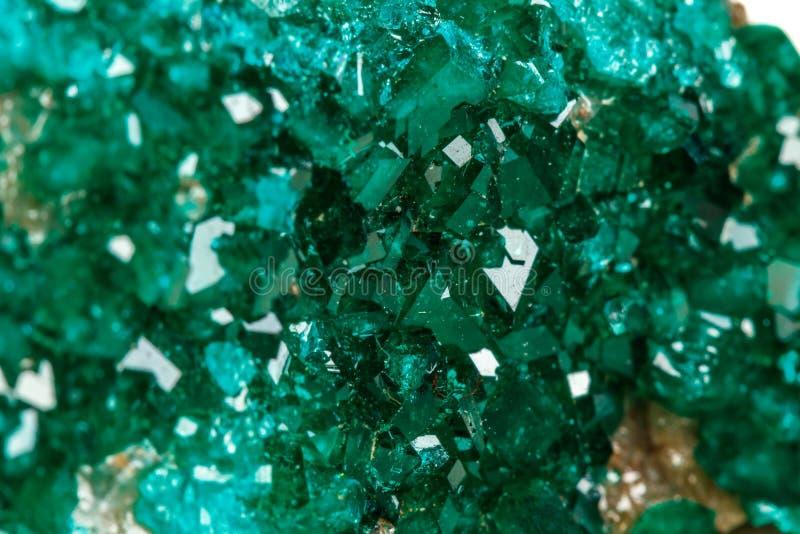 För stenDioptase för makro mineralisk koppar silikat på en vit backgrou royaltyfri bild