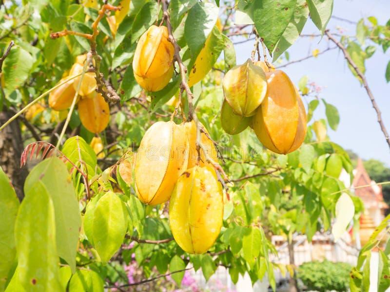 För stjärnaäpple för ny frukt träd arkivfoto
