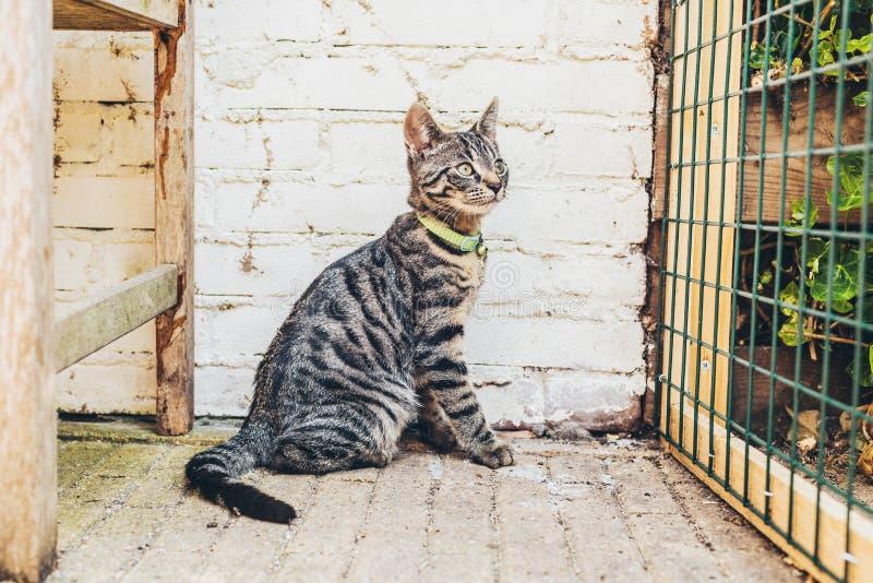 För strimmig kattkatt för varning randigt grått hålla ögonen på för sammanträde arkivfoto