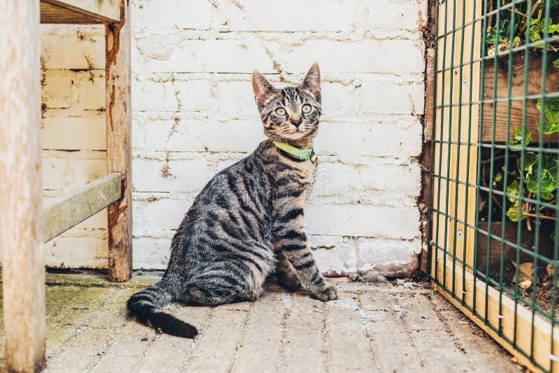 För strimmig kattkatt för varning randigt grått hålla ögonen på för sammanträde royaltyfri fotografi