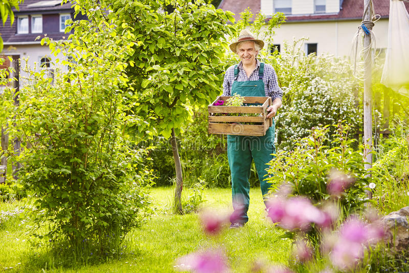 För sugrörhatt för trädgårds- trädgårdsmästare bärande växter för ask arkivfoto