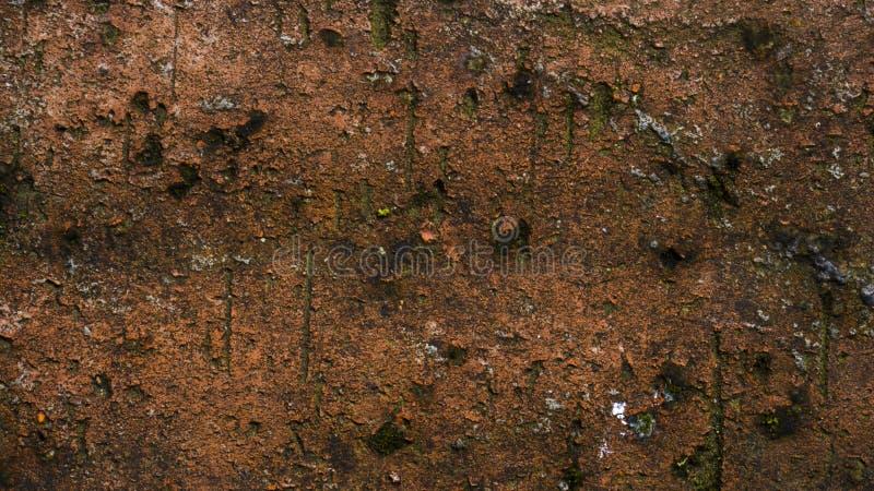 För texturmakro för röd tegelsten closeup, gammal detaljerad grov grungetextur royaltyfri bild