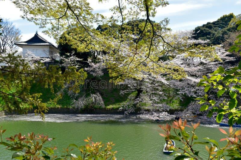 För Tokyo för slott för slott för körsbärsröd blomning imperialistisk sikt Chiyoda för sjö vår royaltyfri fotografi
