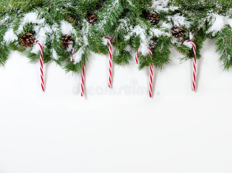 För trädfilialer för jul snöig prydnader och för godisrotting på vit royaltyfria foton