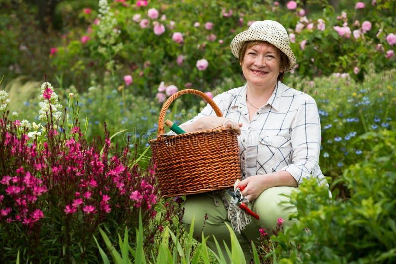För trädgårdsmästarerosa färger för pensionär kvinnliga blommor royaltyfria foton