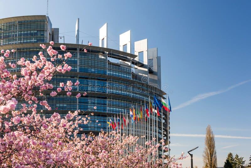 För trädsakura för körsbärsröd blomning Europaparlamentet treee arkivfoto