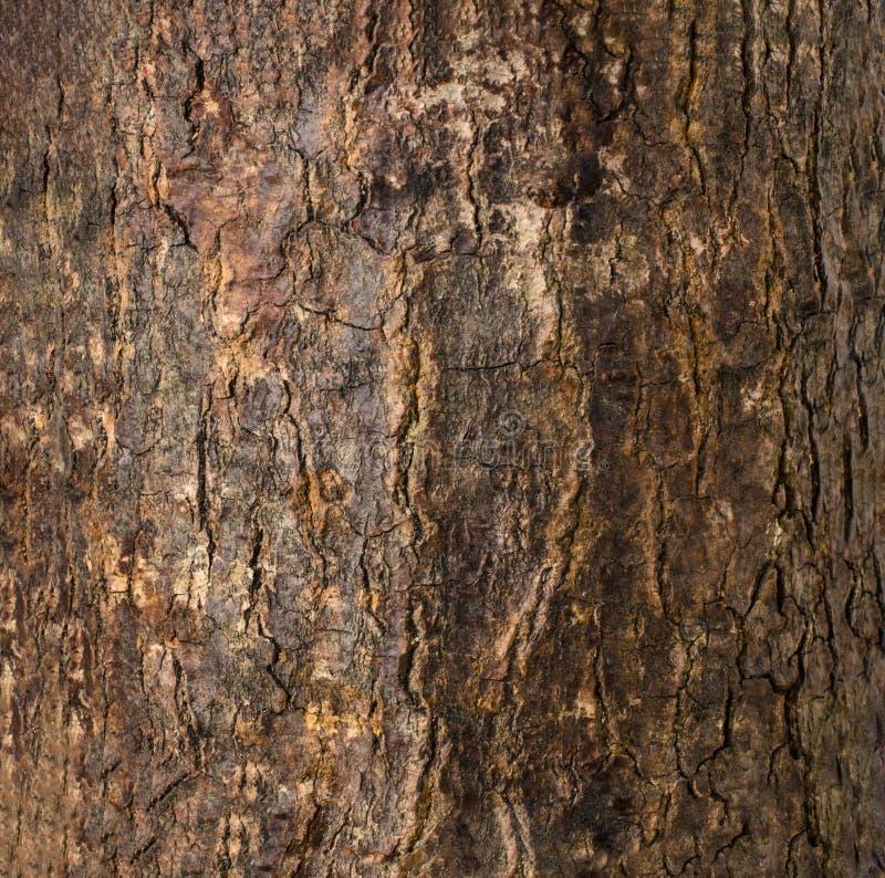 För trädskäll för mörk brunt knäckt textur arkivbilder