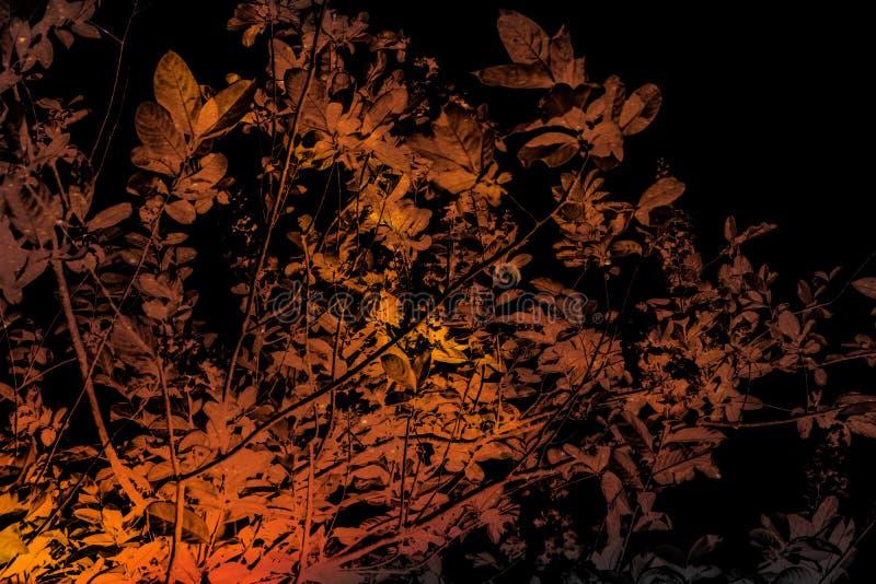 För trädväxt för härlig abstrakt textur färgrikt orange svartvitt landskap för skog på mörkret och den svarta bakgrunden och waen royaltyfria bilder
