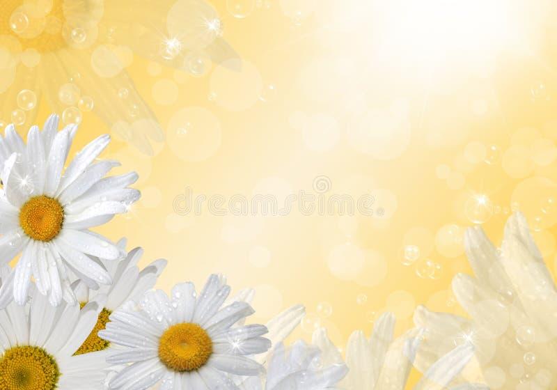 för tusenskönadjupfält för kortslutning white mycket vektor illustrationer