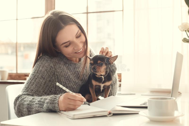 För ung kvinna för freelancer atmosfär för vinter för begrepp för inrikesdepartementet inomhus med leksakterriern arkivbild