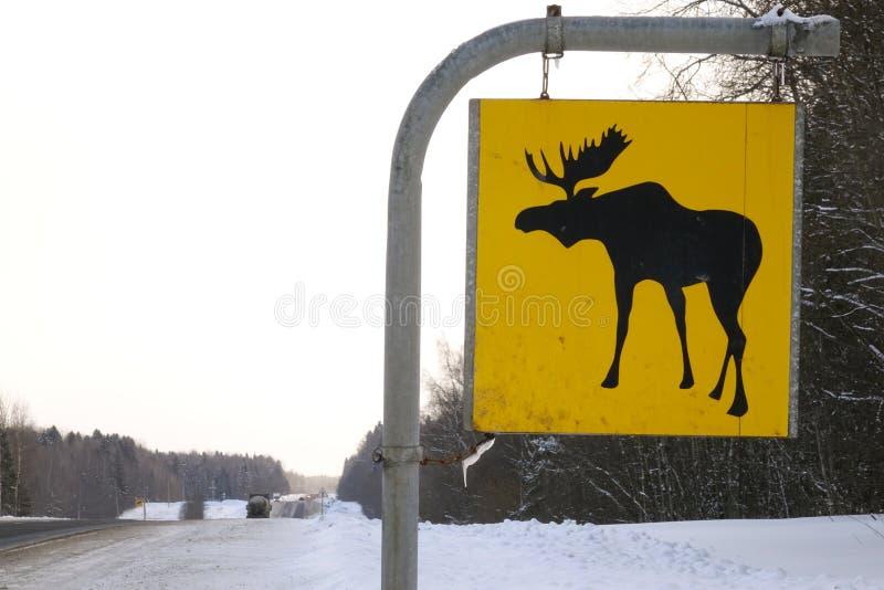 för vägmärketon för vinkel blå sikt wide Älgen är vilda djur royaltyfri fotografi