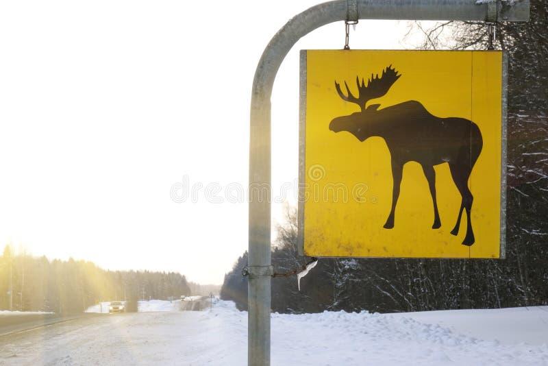 för vägmärketon för vinkel blå sikt wide Älgen är vilda djur royaltyfria foton