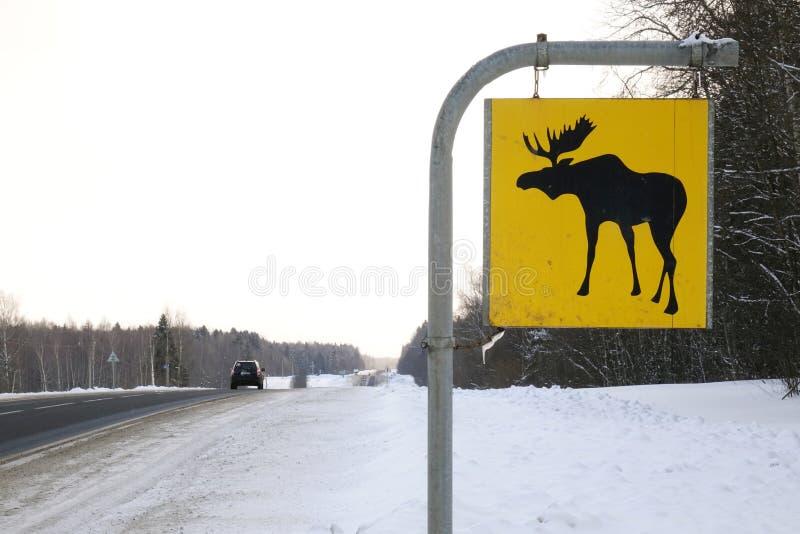 för vägmärketon för vinkel blå sikt wide Älgen är vilda djur royaltyfri foto