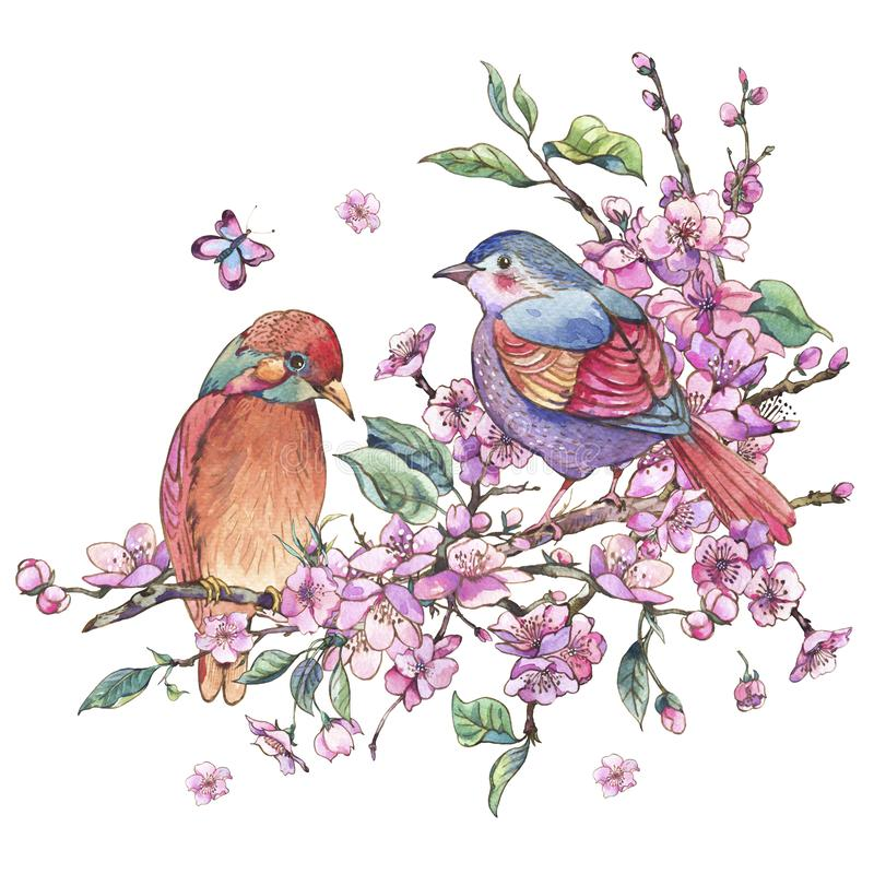 För vårhälsning för vattenfärg blom- kort, rosa blommande filialnolla stock illustrationer