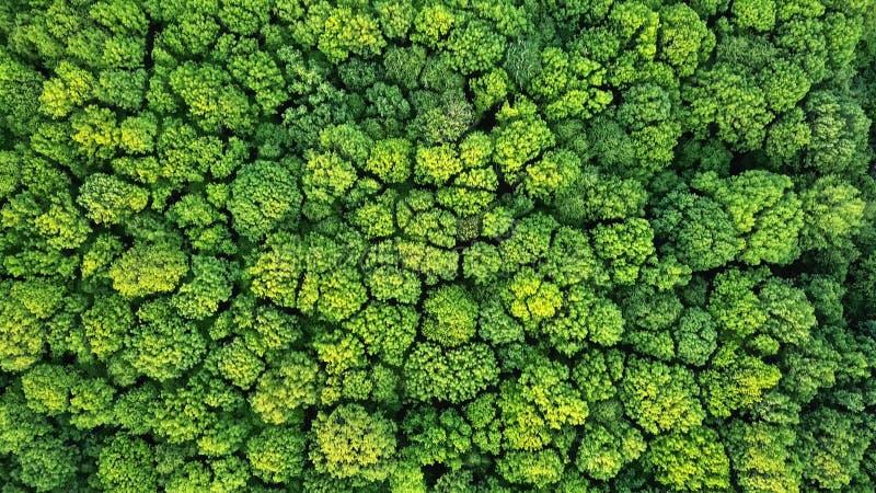 För vårskog för flyg- sikt naturlig grön bakgrund Foto från surret royaltyfri foto