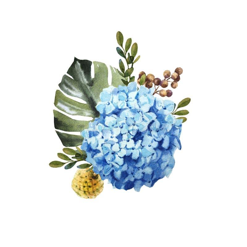 För vanlig hortensiablomma för vattenfärg blå bukett med sidor vektor illustrationer