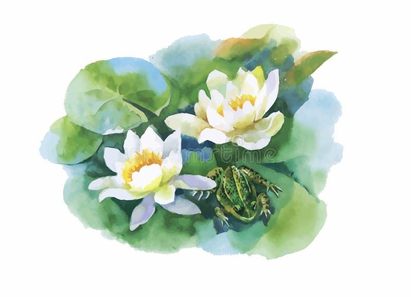 För vatten-lillyblommor för vattenfärg vit modell med grodan på dammvektorillustration stock illustrationer