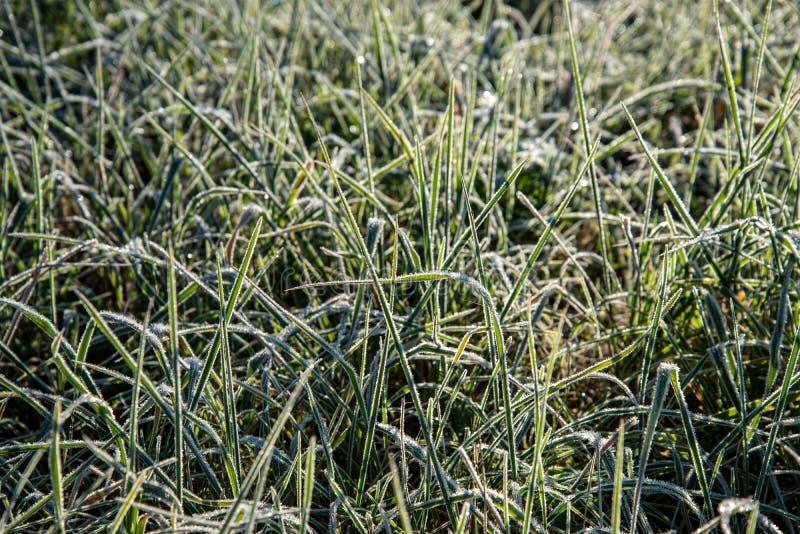 för vegetationträd för vinter som torrt frostigt för filialer och för sidor täckas med snö royaltyfri bild