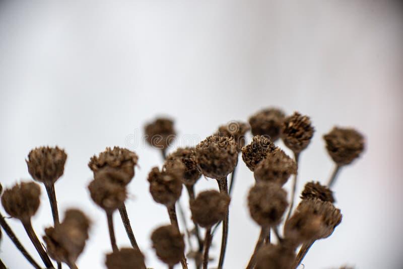 för vegetationträd för vinter som torrt frostigt för filialer och för sidor täckas med snö arkivfoto