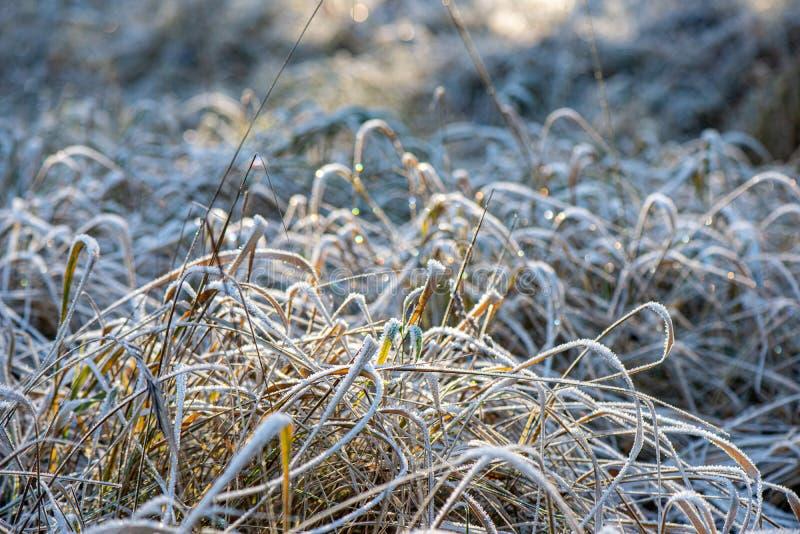 för vegetationträd för vinter som torrt frostigt för filialer och för sidor täckas med snö arkivbilder