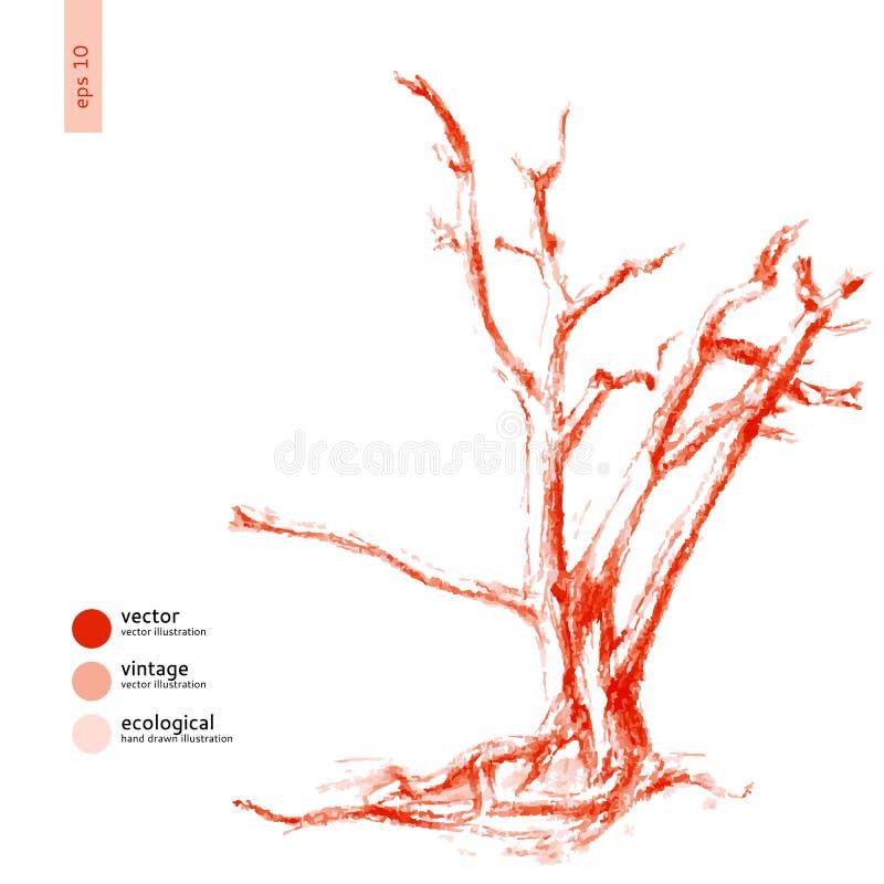 För vektorgravyr för träd skissar den grafiska handen drog klottret isolerat på vit bakgrund, tappningstil, mallen för design royaltyfri illustrationer