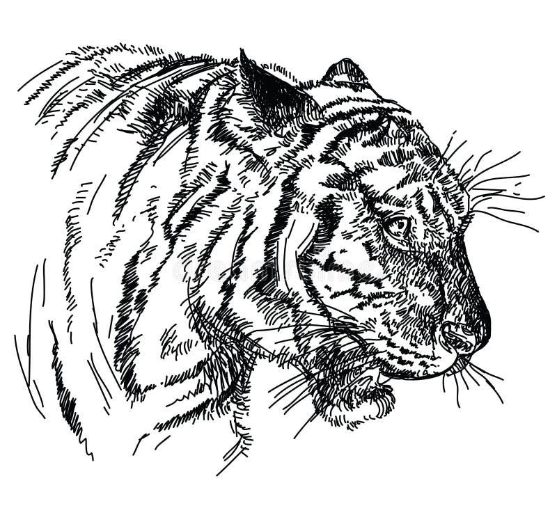 För vektorhand för tiger head illustration för teckning vektor illustrationer