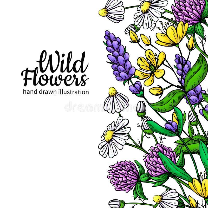 För vektorteckning för lösa blommor uppsättning Isolerade ängväxter och sidor Växt- konstnärligt vektor illustrationer