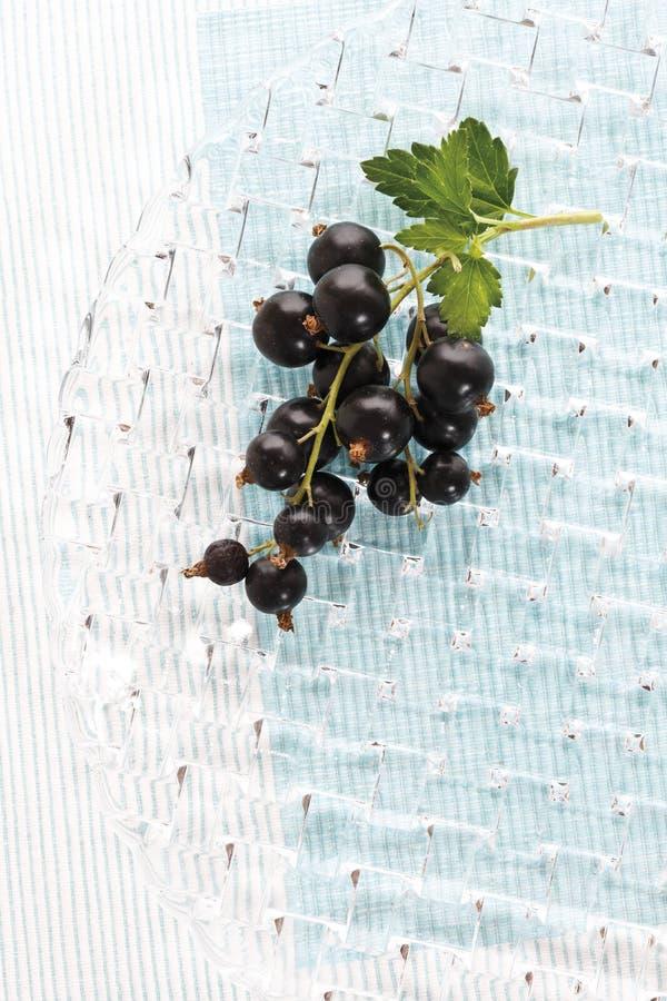 för vinbärdjup för black tät narrow för fält upp royaltyfri foto