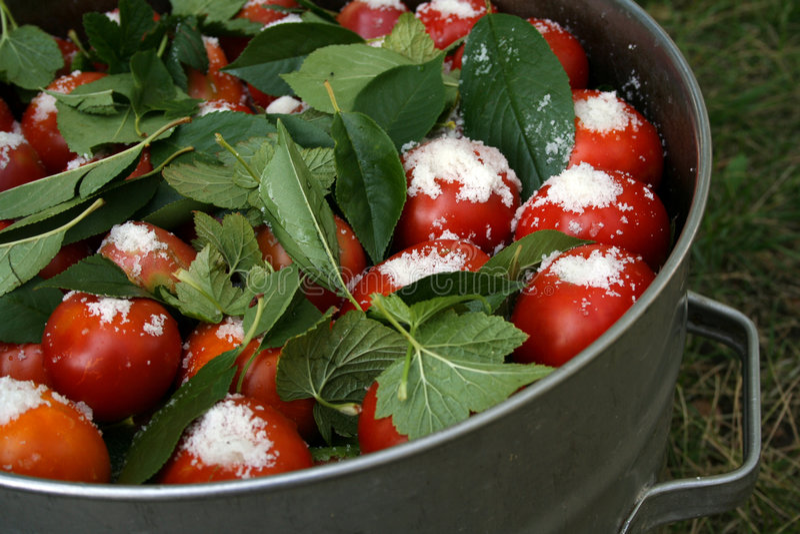för vinbärleaves för arm salt tomater för stor panna arkivfoto