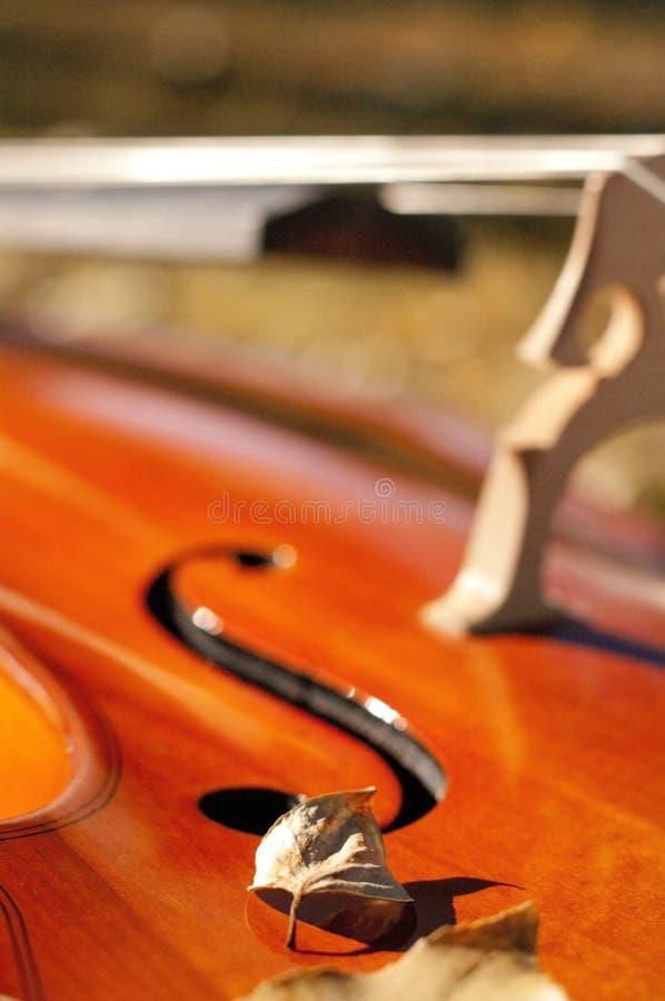 För violoncell closeup utomhus i parkera på nedgånghöstdag med colou fotografering för bildbyråer