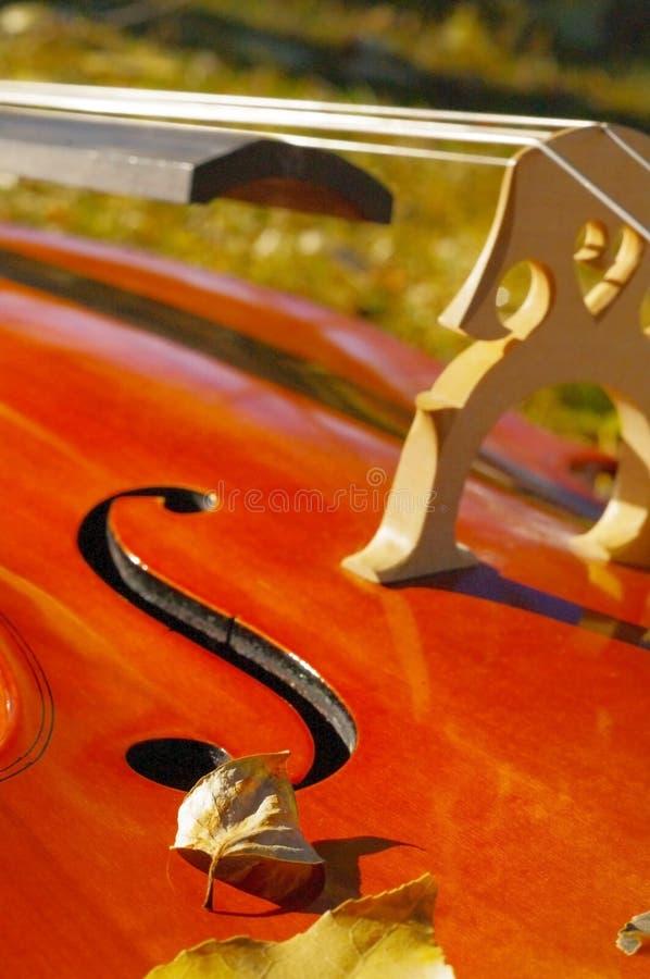 För violoncell closeup utomhus i parkera på nedgånghöstdag med colou arkivbild