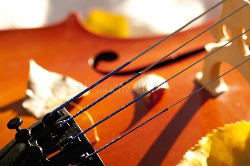 För violoncell closeup utomhus i parkera på nedgånghöstdag med colou royaltyfri bild