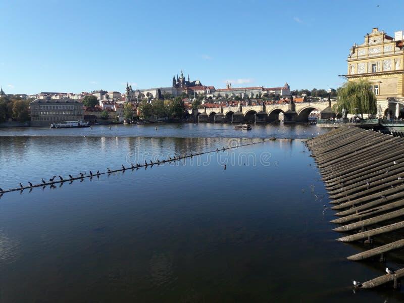 För vltava för gotisk tjeckisk domkyrka för turism Prague tjeckisk huvudstad domkyrka i varm sommar i den Centraleuropa protestan royaltyfri bild